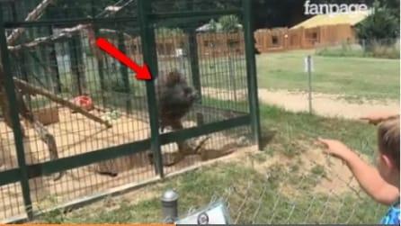 Il padre filma le bambine mentre prendono in giro un babbuino: la reazione dell'animale spiazza tutti
