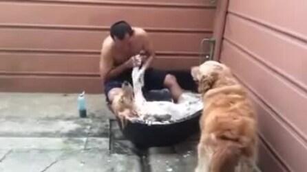 Come in una SPA, cane si rilassa durante il trattamento di bellezza