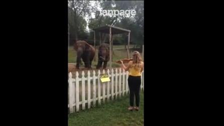 Anche gli elefanti sanno apprezzare la buona musica: ballano a tempo sulla melodia del violino
