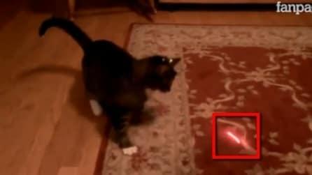 Ecco la reazione di un gatto di fronte ad un laser