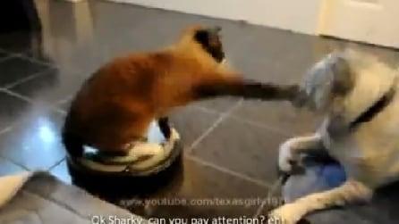 Gatto manesco, ecco la reazione di questo povero cane