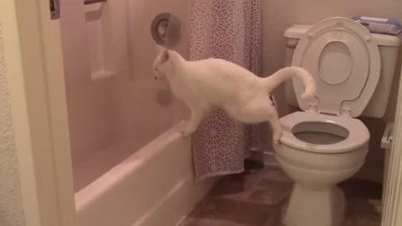 Il gatto la fa fuori dal vaso