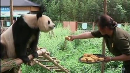 Cina, allo Yunnan Wild Animal park si festeggia così il festival di metà autunno