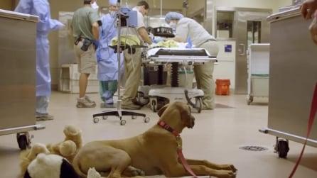 Amicizie speciali fra cuccioli: cane assiste in sala operatoria il ghepardo