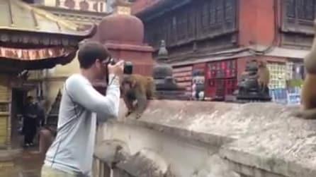 """Fotografa il cucciolo di scimmia """"senza permesso"""", la mamma si arrabbia"""