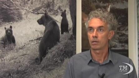 La morte dell'orsa Daniza invita a riflettere sulla convivenza uomo animali