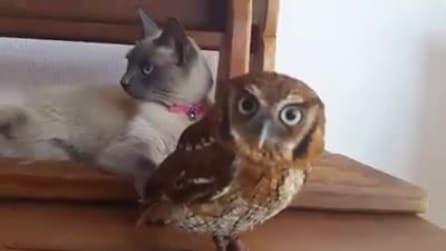 Il gatto e la civetta, un'amicizia inaspettata