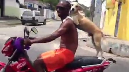 Il cane si tiene forte al suo padrone sulla moto