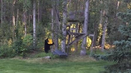 L'orso che si diverte a far scoppiare una busta di plastica