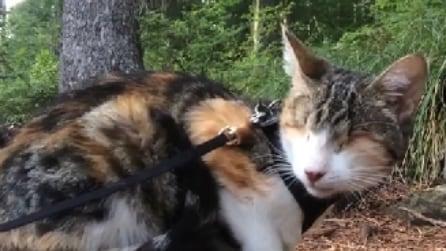 Honey Bee, il gatto cieco con un gran senso per l'avventura