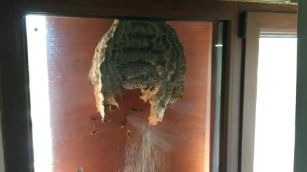 Un gigantesco nido di vespe attaccato alla finestra
