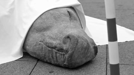 #Chièstato, il rinoceronte morto e privo del suo corno scuote la coscienza dei milanesi