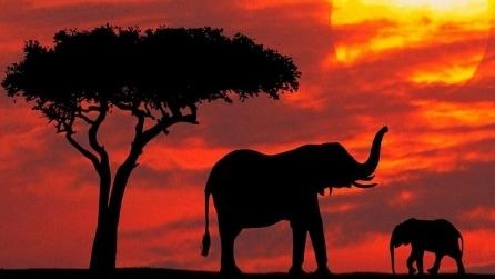 """Il tragico allarme del WWF: """"Negli ultimi 40 anni sparita metà della fauna selvatica"""""""