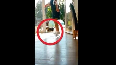 """Il cane aspetta che il padrone apra una """"porta invisibile"""" per entrare"""