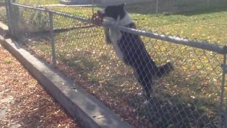 Il cane odia la solitudine e vuole giocare: così attira i passanti per potersi divertire