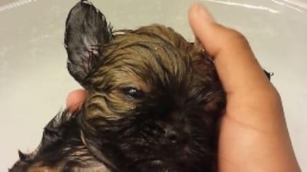 Cucciolo di cane si addormenta durante il suo primo bagnetto