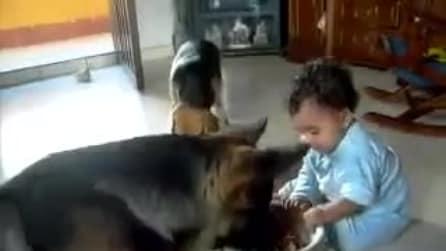Duello all'ultima pappa tra il bimbo e il cane lupo