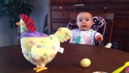 La gallina cova le uova, ecco la reazione spettacolare del neonato