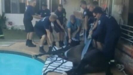Cavallo cade accidentalmente nella piscina del proprietario, il delicato soccorso