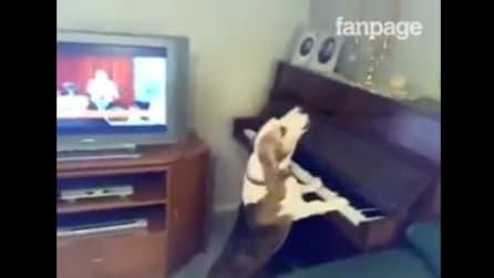 Suona il piano e ulula, ecco il cane dal grandissimo talento