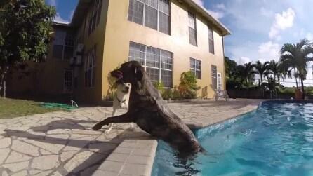 La storia di Sheridan, il cane che ha vinto la sua battaglia contro il cancro alle ossa