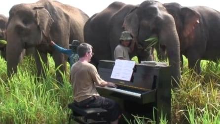 Thailandia, il pianista che suona Beethoven per gli elefanti anziani e malati