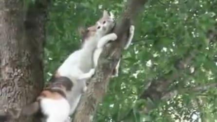 Il figlio non riesce a scende dall'albero, interviene mamma gatta