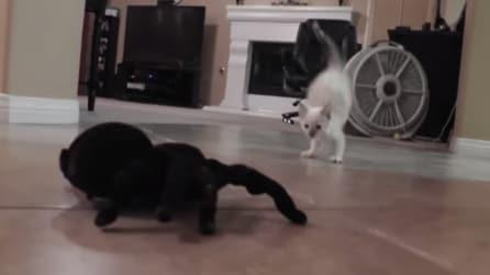 Ecco la buffa reazione di un gattino di fronte ad un ragno telecomandato