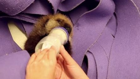 Orfana e denutrita, la piccola lontra accolta dallo staff dell'acquario di Chicago