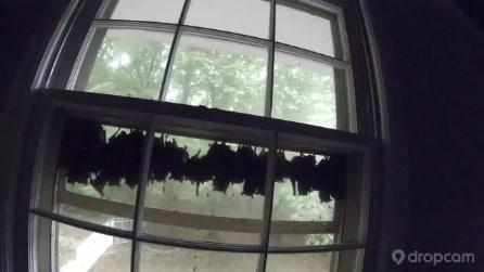 Filma per 24 ore i pipistrelli, il timelapse