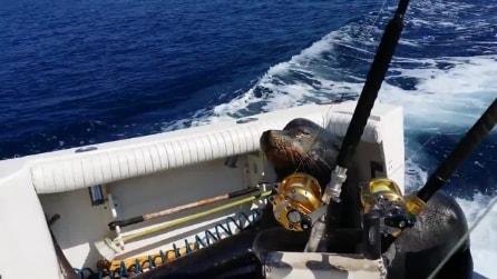 Messico, leone marino sale sulla barca per uno spuntino
