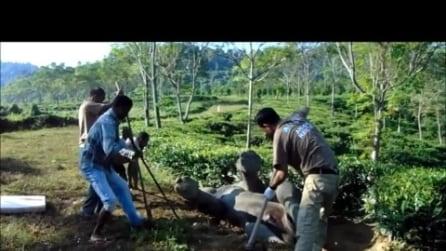 Elefante cade in un canale: i volontari fanno di tutto per salvarlo
