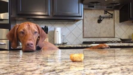 Argus vs il pezzo di patata: riuscirà a non cadere in tentazione?