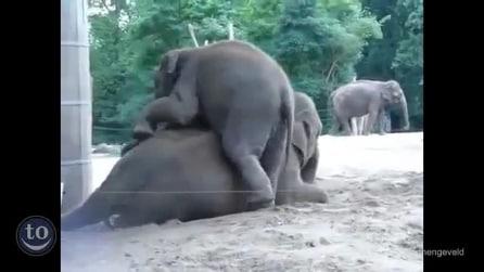 Così piccoli, così monelli: quanto sono dolci questi elefantini