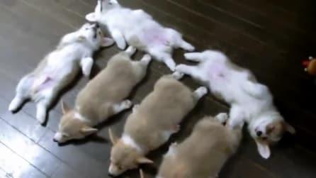 Tutti a nanna: ecco le posizioni che i cuccioli assumono quando dormono