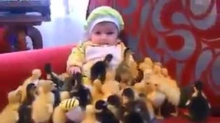 La bambina e i pulcini