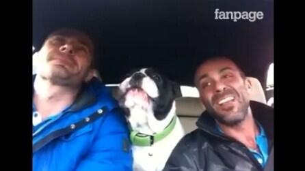 Cantano la loro canzone preferita in auto, l'esibizione del bulldog vi lascerà senza parole
