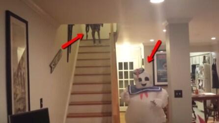Ecco la reazione di un cane quando vede un fantasma