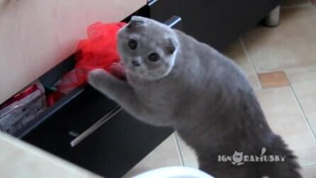 Colto sul fatto: ecco come reagisce il gatto quando viene scoperto