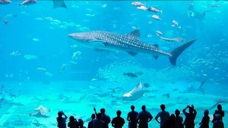 Lo spettacolare acquario di Okinawa, circondato dall'oceano
