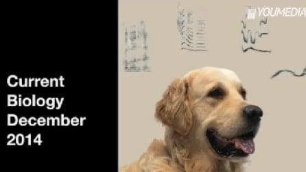 Come reagisce il cervello del nostro cane quando gli parliamo?