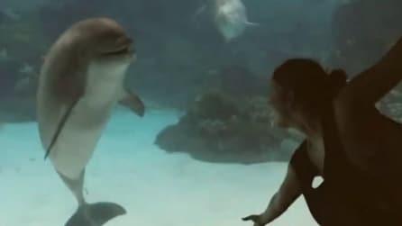 Balla davanti all'acquario e il delfino la osserva divertito