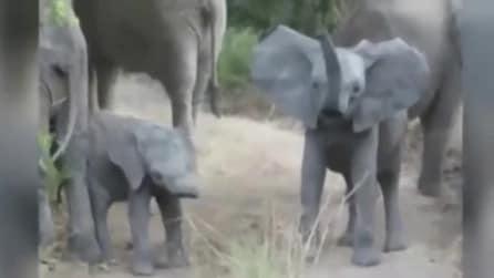 L'elefante quasi coraggioso: prima spaventa i turisti poi corre a cercare la mamma