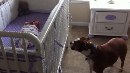 La neonata piange nella sua culla, ecco la reazione tenerissima del cane