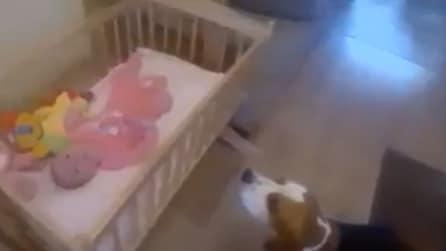 Il beagle culla il suo piccolo amico, una scena tenerissima
