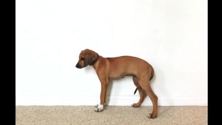 La crescita del cucciolo Sophia in due minuti