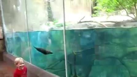 Il bambino e la foca giocano a rincorrersi