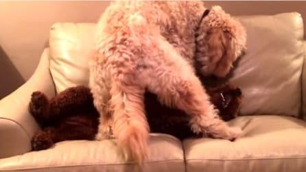 Il suo cucciolo sta facendo un brutto sogno, la mamma accorre a tranquillizzarlo