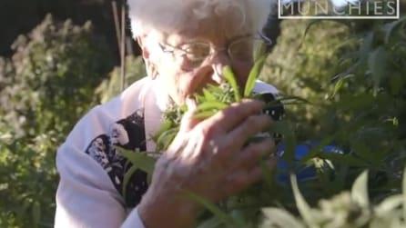 """Nonna Marijuana, così crea il suo burro alle """"erbe"""" per cucinare gli gnocchi"""