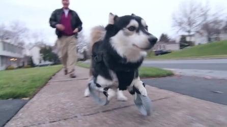 Derby, il cane che corre grazie alle protesi realizzate con una stampante 3D